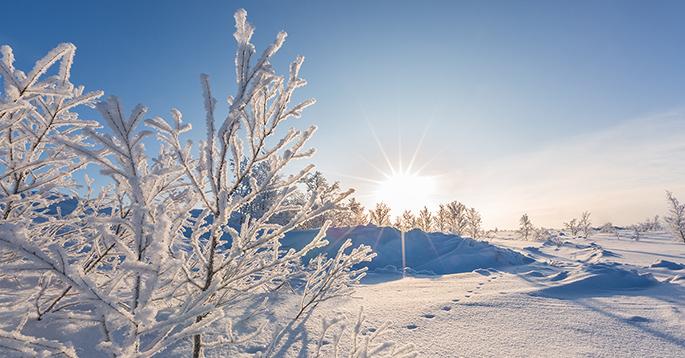 Snøkledd vinterlandskap