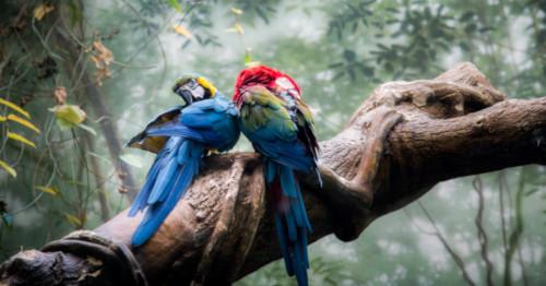 To fargerike papegøyer i et tre